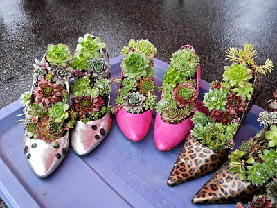 Photograph - Hens And Chicks In Shoes by Kent Lorentzen