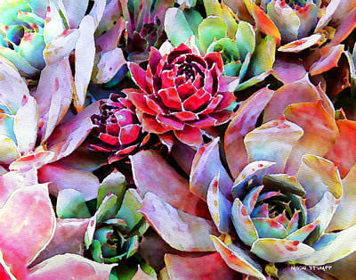Florals Royalty-Free and Rights-Managed Images - Hens and Chicks series - Copper Tarnish  by Moon Stumpp