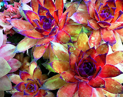 Abstract Royalty-Free and Rights-Managed Images - Hens and Chicks series - Garden Brass by Moon Stumpp