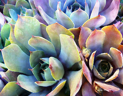 Cactus Painting - Hens And Chicks Series - Soft Tints by Moon Stumpp