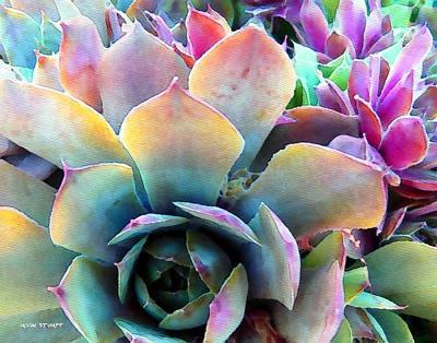 Florals Royalty-Free and Rights-Managed Images - Hens and Chicks series - Unfolding by Moon Stumpp