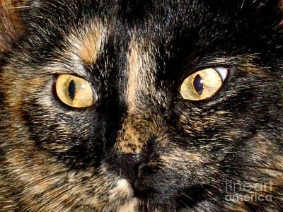 Photograph - Her Beautiful Eyes by Oksana Semenchenko