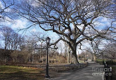 Her Majesty The Tree Art Print by Rafael Quirindongo