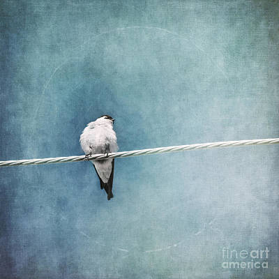 Blue Photograph - Herald Of Spring by Priska Wettstein