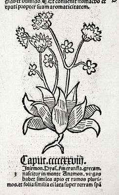 Herbal Plant Art Print