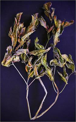 Photograph - Herbarium 1 by Vladimir Kholostykh
