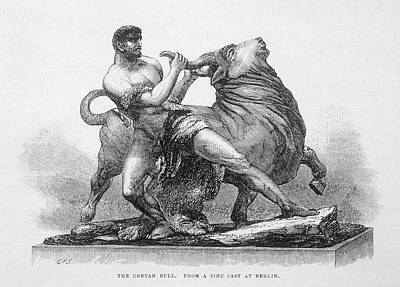 Minotaur Drawing - Hercules Captures The Cretan  Bull by Mary Evans Picture Library