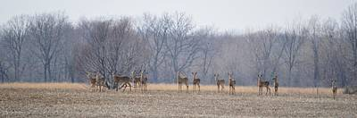 Photograph - Herd Mentality by Bonfire Photography