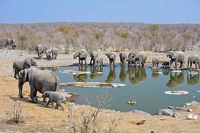 Pachyderm Photograph - Herd Of African Elephants Drinking by Tony Camacho