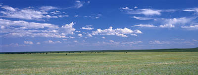 Buffalo Photograph - Herd Of Bison On Prairie Cheyenne Wy Usa by Panoramic Images