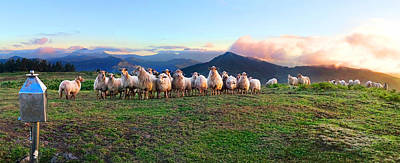 Photograph - Herd Of Sheep In The Sunset by Weston Westmoreland