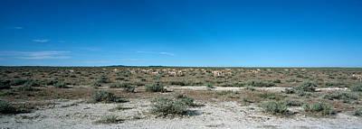 Herd Of Springboks Antidorcas Art Print by Panoramic Images
