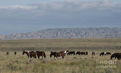 Strong America Photograph - Herd Of Wild Horses by Juli Scalzi