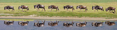 Herd Of Wildebeests Walking In A Row Art Print by Panoramic Images