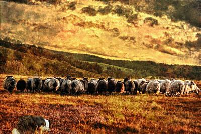 Herding Art Print by Sabine Peters