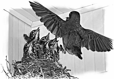 Bird And Worm Photograph - Here Comes Mom Monochrome by Steve Harrington
