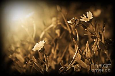 Sepia Flowers Photograph - Here Comes The Sun by Clare Bevan