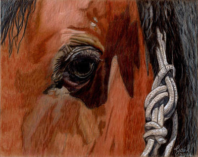 Drawing Of A Horse Drawing - Here Is Looking At You by Gail Seufferlein