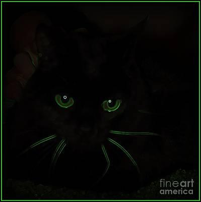 Photograph - Here Kitty Kitty by Bobbee Rickard