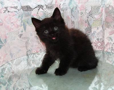 Photograph - Here Kitty Kitty by Davandra Cribbie