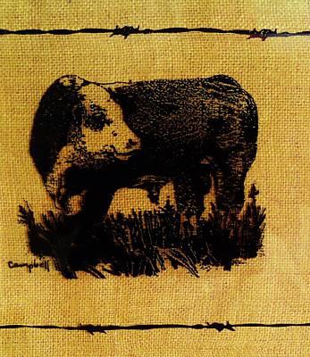 Polled Hereford Bull 12 Art Print