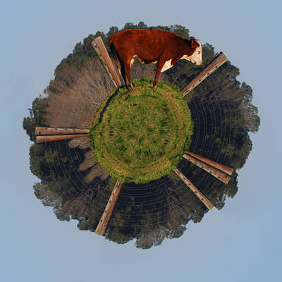 Photograph - Hereford On Top Of The Pasture Wee Planet by Paulette B Wright