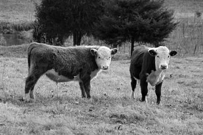 Photograph - Hereford Portrait V In Black And White by Suzanne Gaff