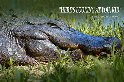 Photograph - Here's Looking At You Kid by Bob Pardue