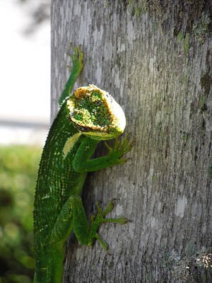 Photograph - Here's Looking At You by Ron Davidson