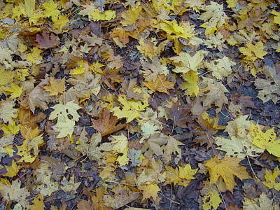 Herfstbladeren Art Print
