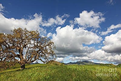 Heritage Oak And Mammoth Clouds Over Mt Diablo State Park California 2013 Art Print by Benjamin Race - Arc of Light Photography
