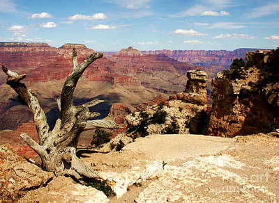 Hermit's Crow - Grand Canyon Art Print by Juan Romagosa