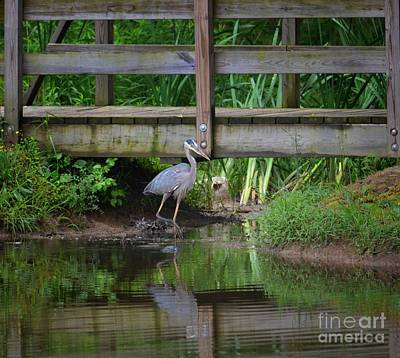 Photograph - Heron 14-2 by Maria Urso