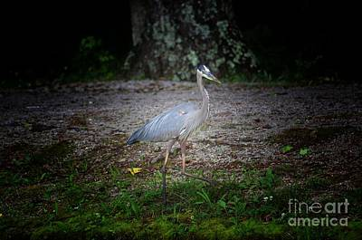 Photograph - Heron 14-6 by Maria Urso