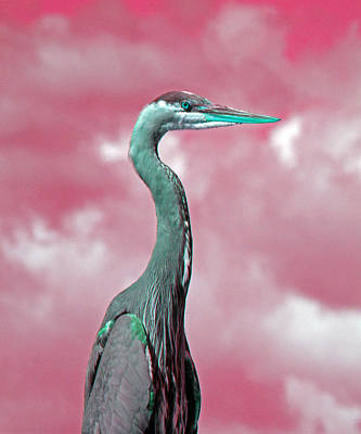 Photograph - Heron 3 by Laurie Tsemak