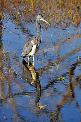 Heron And Reflection In Jekyll Island's Marsh Art Print by Bruce Gourley