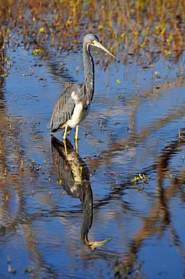 Heron And Reflection In Jekyll Island's Marsh Art Print