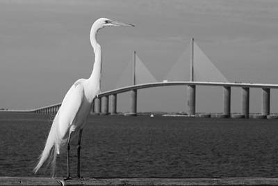 Print featuring the photograph Heron And Skyway by Daniel Woodrum