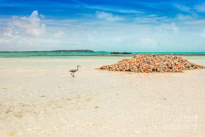 Photograph - Heron Approaches Conch Pile by Jo Ann Snover