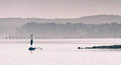 Photograph - Heron At Dawn by Linda Shannon Morgan