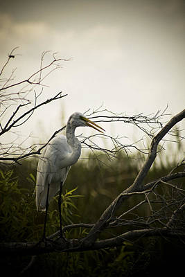 Heron At Dusk Art Print by Bradley R Youngberg