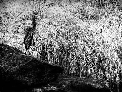 Photograph - Heron At Smith Rock Oregon by Coby Cooper