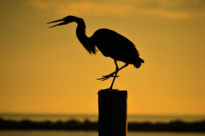 Heron At Sunrise Art Print
