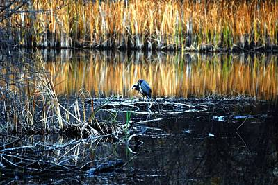 Canadian Photograph - Heron At Sunset by Don Mann