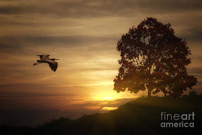 Heron At Sunset Art Print by Tom York Images