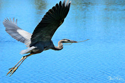 Photograph - Heron Bearing Gifts by Susan Molnar