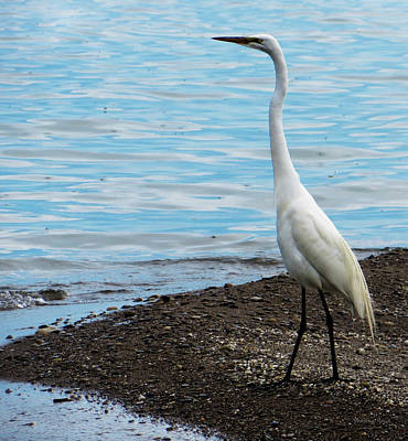 Photograph - Heron By The Beach by Shawna Rowe