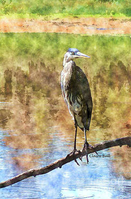 Photograph - Heron by Claire Bull