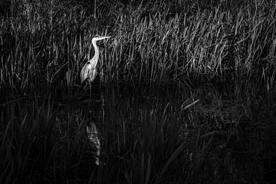 Art Print featuring the photograph Heron by David Isaacson