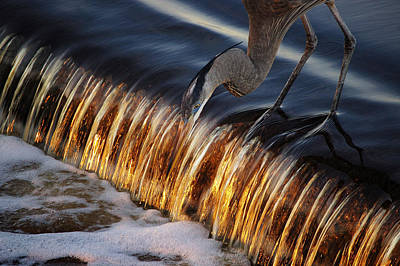 Digital Art - Heron Fishing At The Weir by Michael Thomas